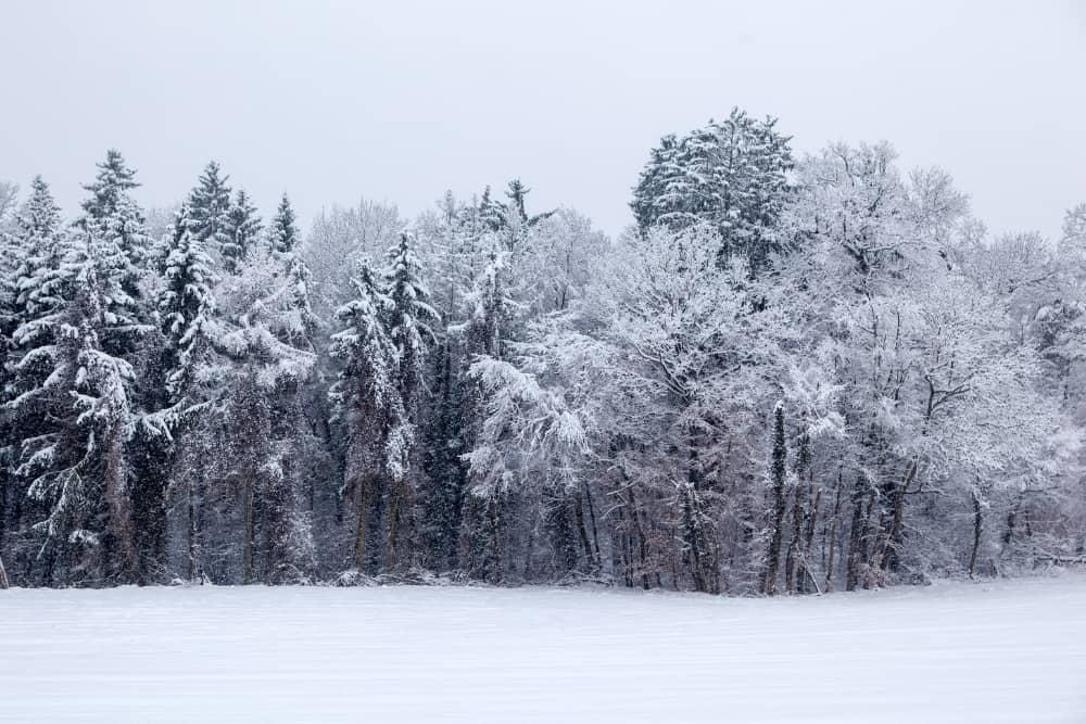 fotografii de iarna