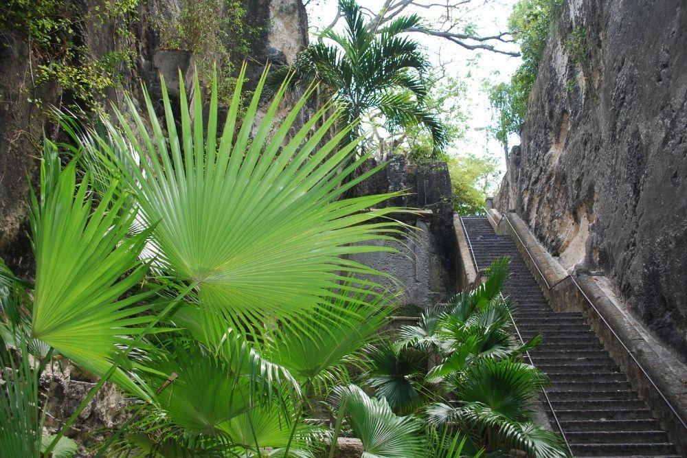 bahamas scarile reginei