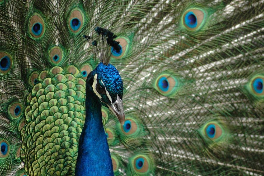 paun zoo