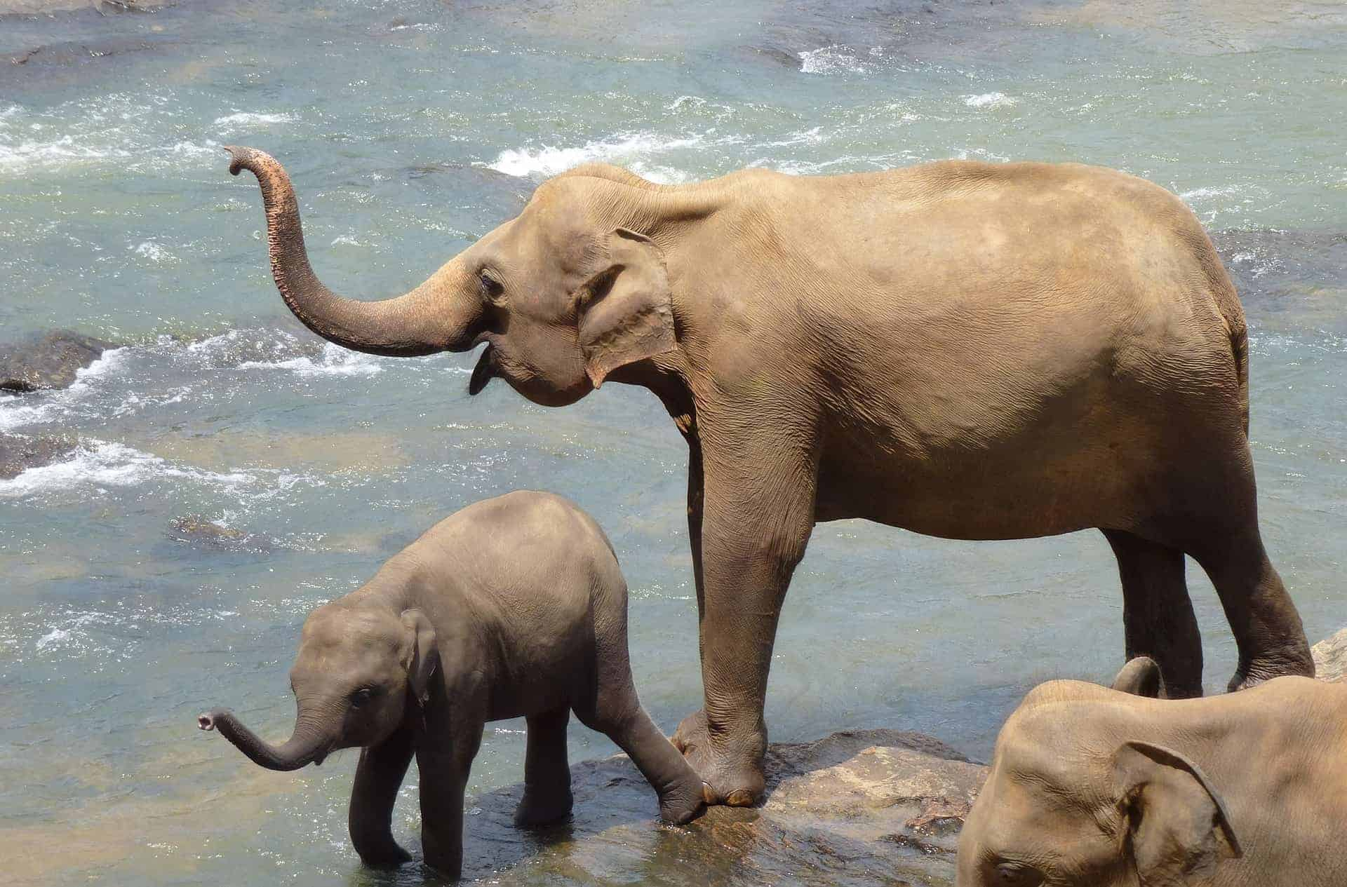 elephant-2419945_1920