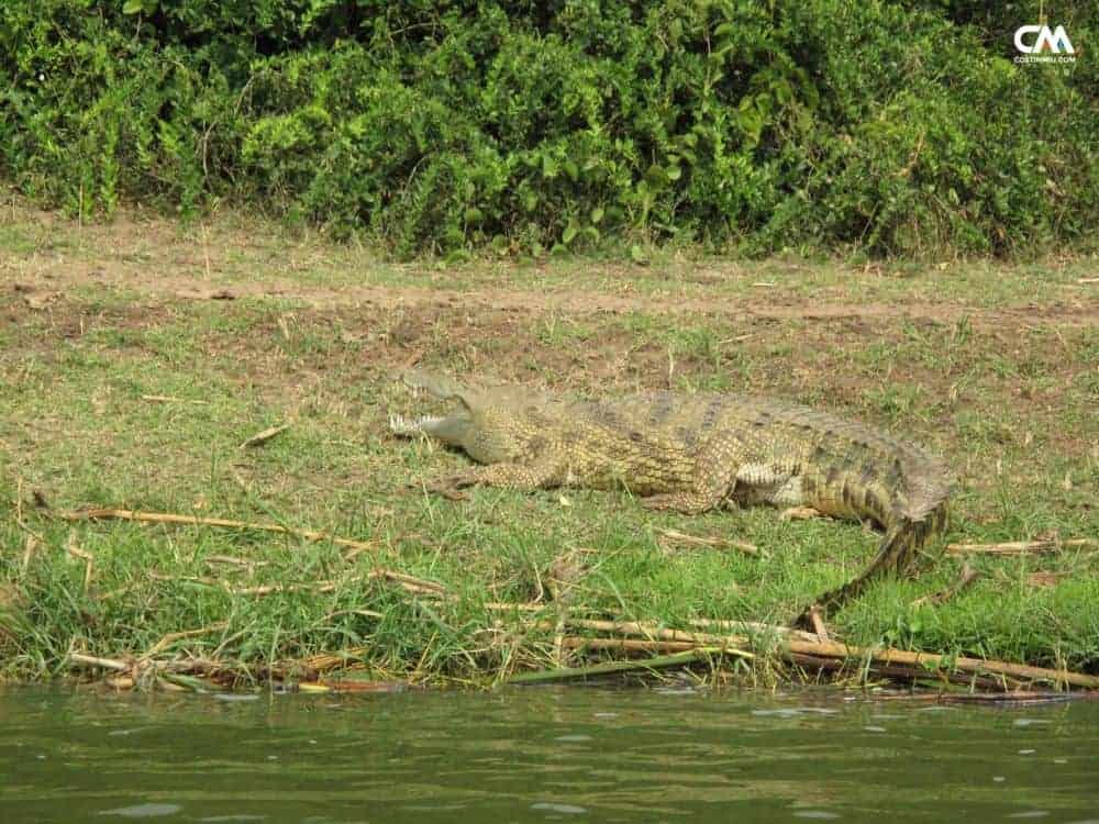 uganda 11