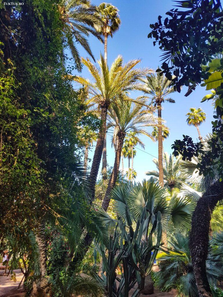 Grădina Majorelle