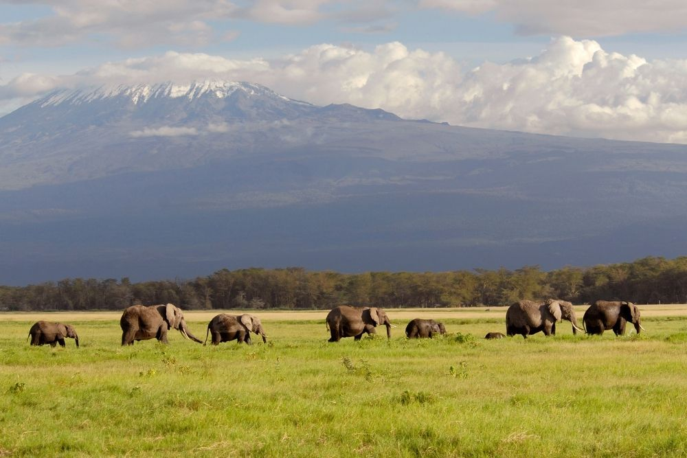 Parcul Național Amboseli