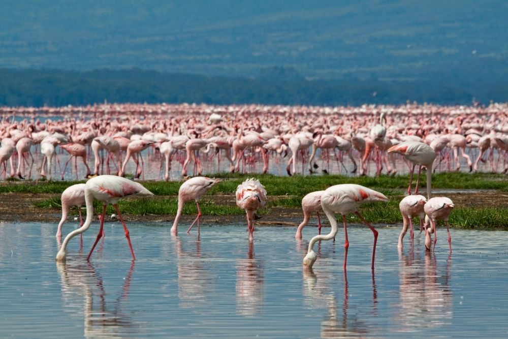 Lacul Nakuru