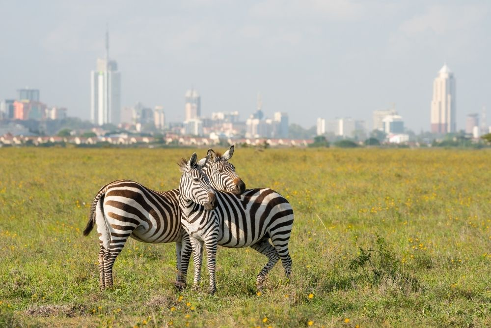 parcul national nairobi