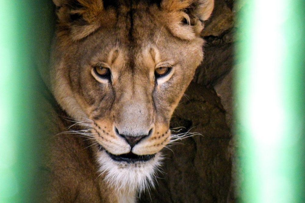 zoo brasov
